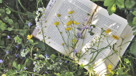 paperback book on greenery shaded by wildflowers
